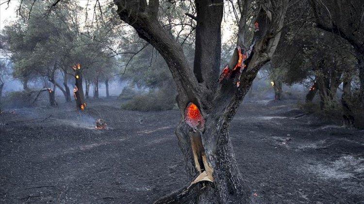 İçişleri Bakanlığı'ndan orman yangınlarıyla ilgili genelge! 81 il valiliğine gönderildi