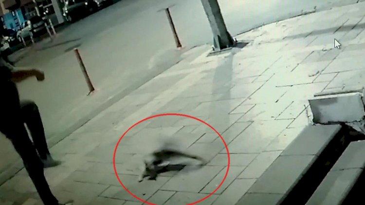 Sokaktaki kediyi tekmeledi, 'sanki adam öldürdük' dedi