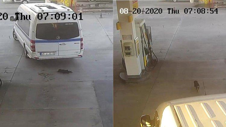 'Onun geçmesini mi bekleyecektim' deyip yavru köpeği ezen sürücü, adli kontrolle serbest bırakıldı