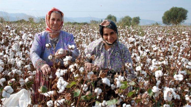 Türk çiftçisini ezdirdik, Yunanistan'dan pamuk alacağız!