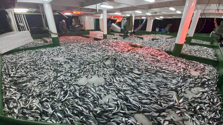 Sezonun ilk balık avı bereketli geçti
