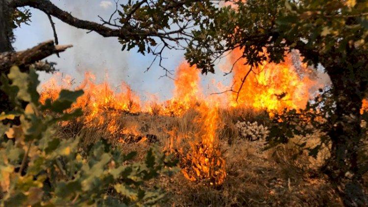 Ankara Kızılcahamam'da yangın