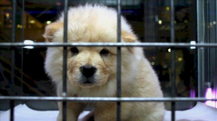İstanbul'un bir ilçesinde evcil hayvan satışı yasaklandı