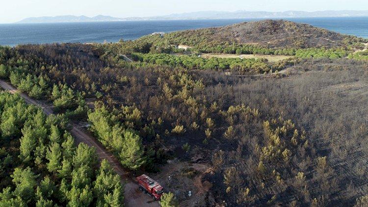 Kara tablo sabah ortaya çıktı: Ayvalık'ta 80 hektar ormanlık alan yandı