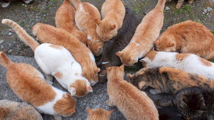 100 metrekarelik evde 110 kediyle yaşıyordu, müdahale edildi