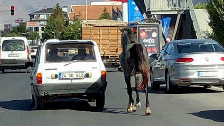 Caniler otomobile bağladıkları atı kilometrelerce koşturdular