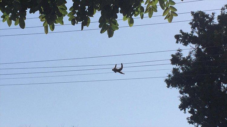 Hayvanat bahçesinden kaçmaya çalışırken elektrik tellerinde akıma kapıldı!