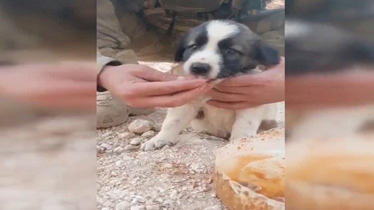 Mehmetçik yemeğini yavru köpeklerle paylaştı