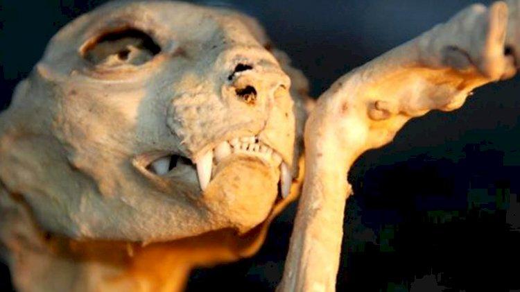 4 profesörün çözemediği hayvan iskeleti gizemini koruyor