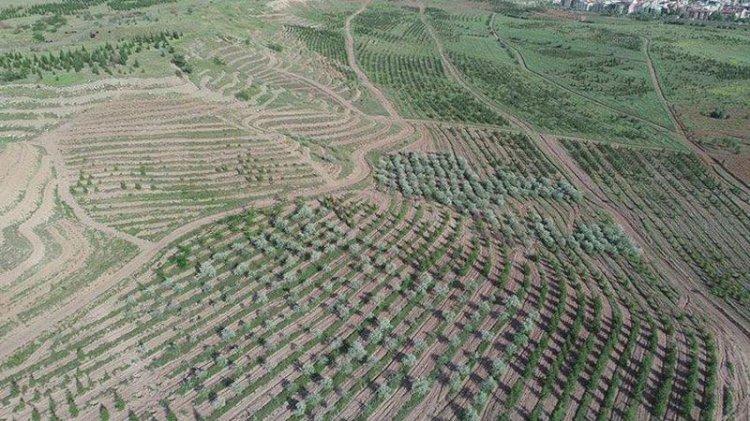 Atatürk Orman Çiftliği'ndeki tehlike: 'Bu gidişle arazi diye bir şey kalmayacak'