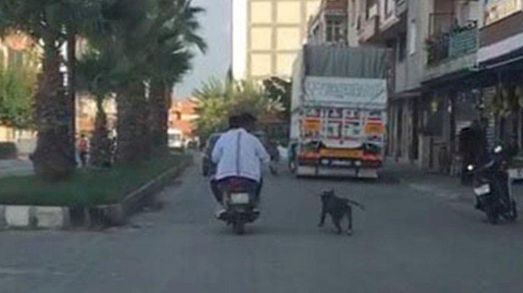 Caniler, köpeği tasmasından tutup motosikletin arkasından koşturdular