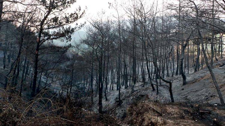 Hatay'da orman yangını kontrol altına alındı... Vatandaşlar nöbette