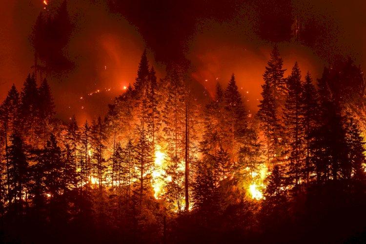 Acı yangın tablosu: 82 yılda Kıbrıs'ın bir buçuk katı orman yandı