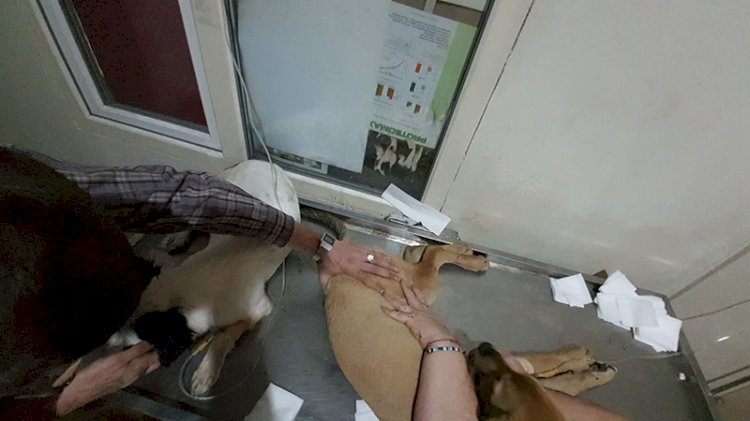 Çanakkale'de köpek katliamı