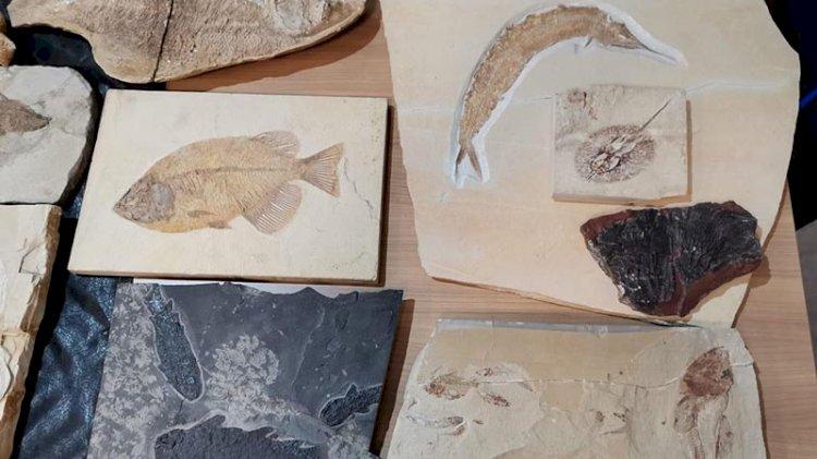Adnan Oktar'ın kaçak fosilleri müzede