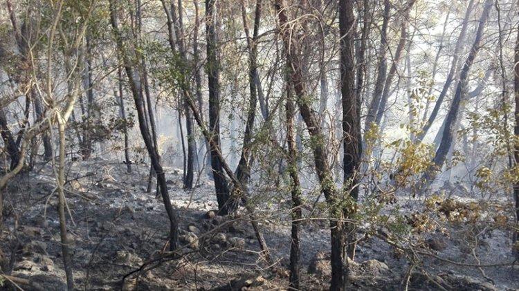 Manavgat'ta orman yangını! Kontrol altına alındı