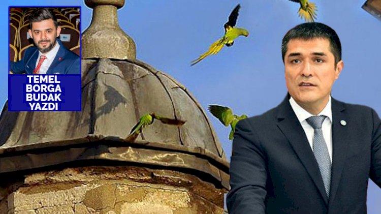 İstanbul'un papağanları