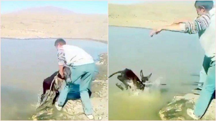 Sıpayı göle atıp eziyet eden kişilere para cezası verildi