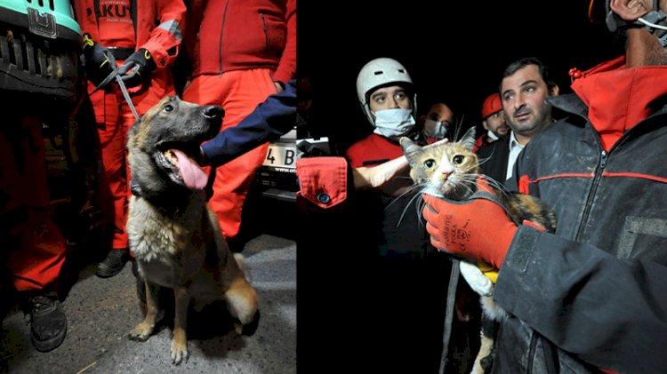 Arama köpeğinin bulduğu kedi kurtarıldı