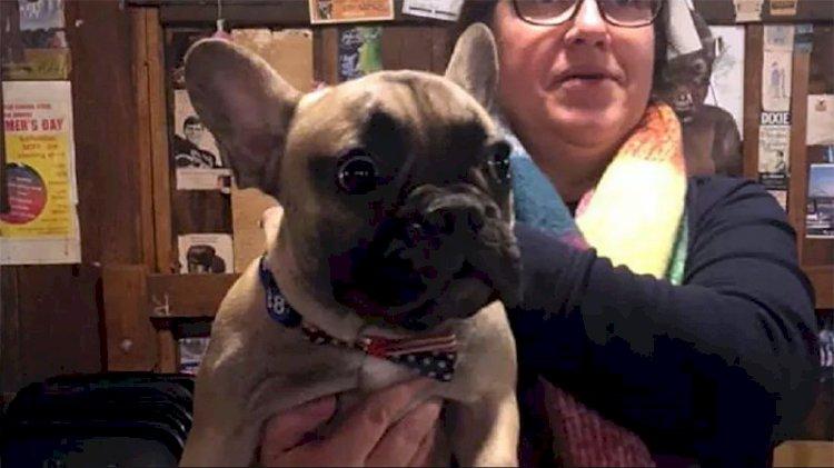 ABD'de bir kasabada köpek belediye başkanı seçildi