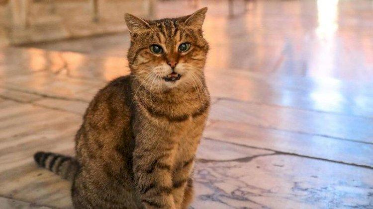 Ayasofya'nın sembol kedisi Gli öldü