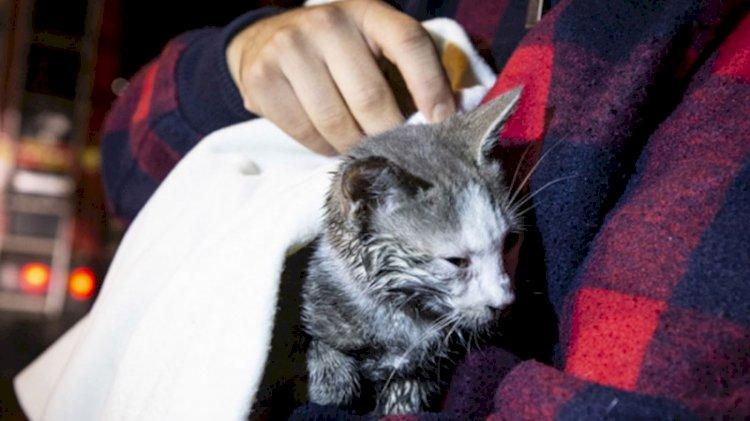 Kız kardeşlerin hayatını kedileri kurtardı