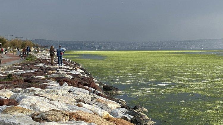 İzmir'de denizin rengi yeşile döndü