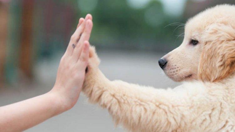 Koronavirüs analizi: Köpek sahipleri risk altında