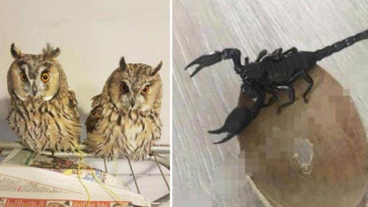 İnternetten hayvan satanlara tepki: Yılan, baykuş, akrep bile satıyorlar