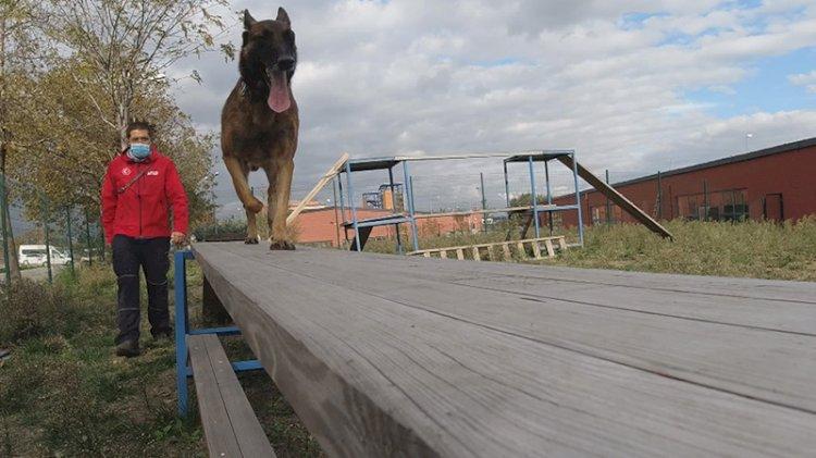 Afetlerde kritik rol üstlenen köpekler