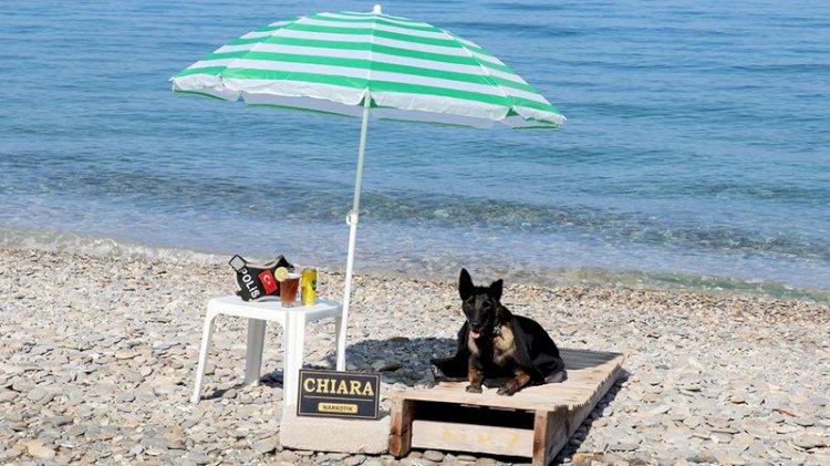 Narkotik köpeği 'Çayra' emekli oldu