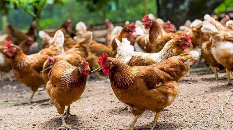 Hayvan öldürülmeden üretilen etin satışı onaylandı