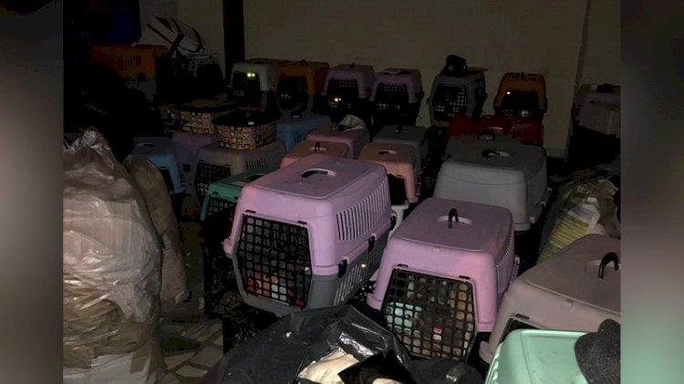 Kötü koşullarda bulunan 9'u yavru 57 kedi kurtarıldı