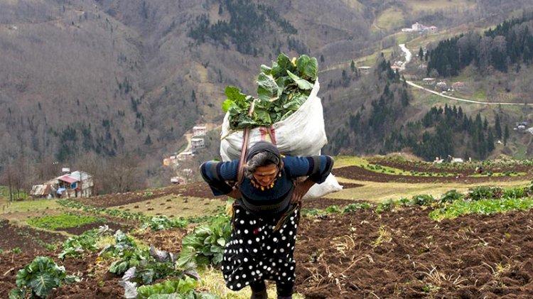 Karadeniz'in çalışkan kadınları, pandemide boş durmadı