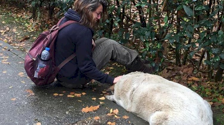 İzmit'teki köpek katliamında yeni gelişme