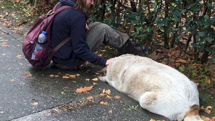 İzmit'te '50'ye yakın sokak köpeği kayıp' iddiası