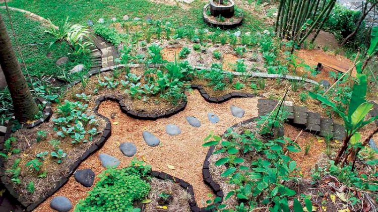 Doğaya karşı değil, doğa ile birlikte: Permakültür nedir?