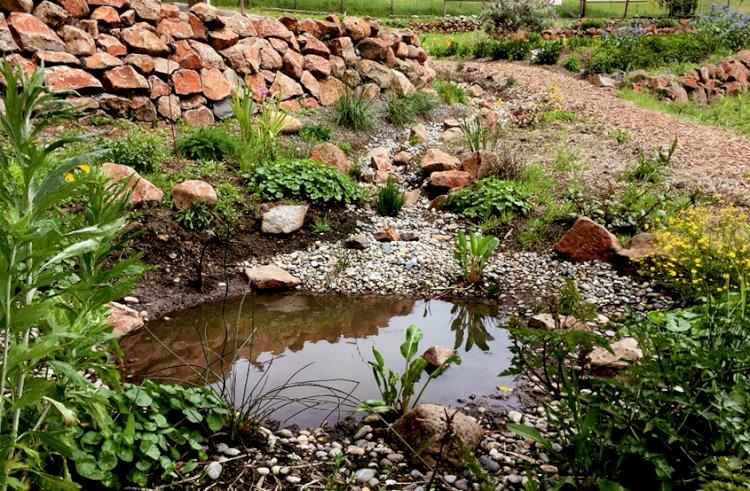 Permakültür su hasadı