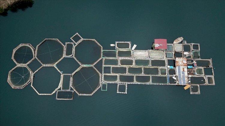 Denizi olmayan şehirden 54 ülkeye balık ihracatı