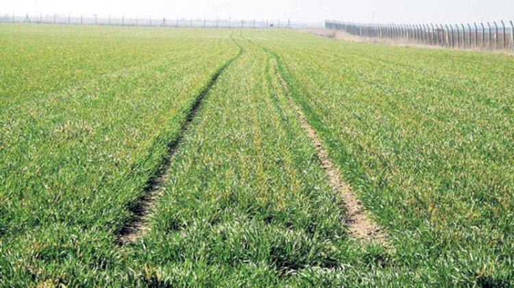 Korkutan rapor... Tarım arazilerinden zehir çıktı