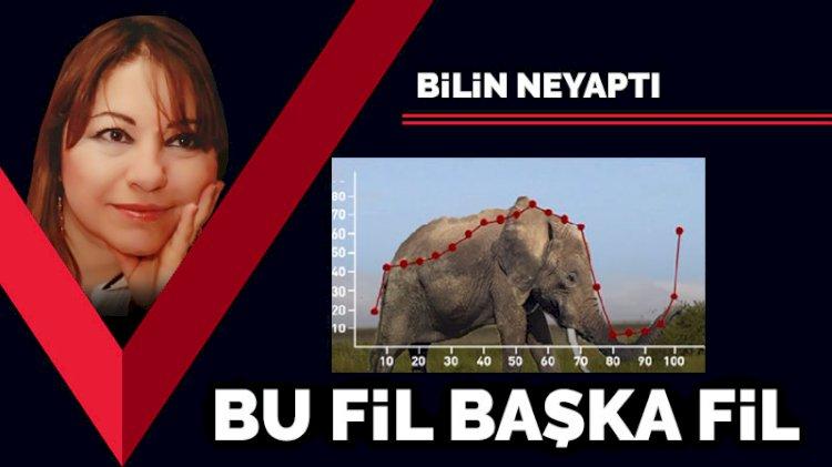 Bu fil başka fil