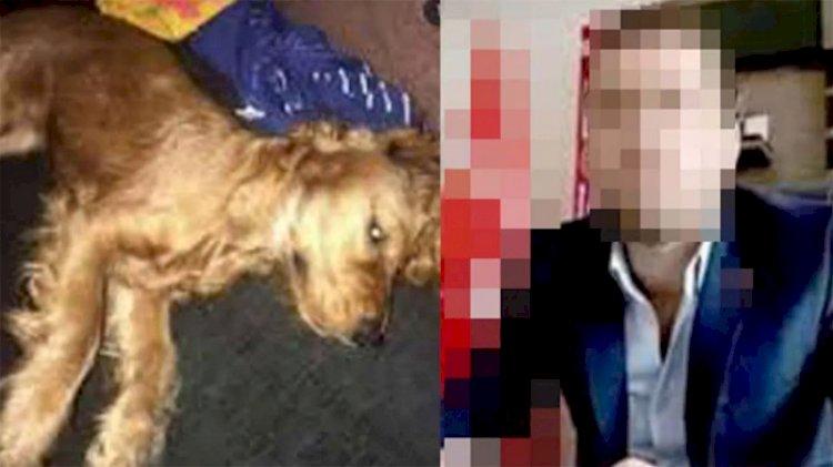 Köpeği tecavüz ederek öldürüldüğü iddia edilen kişi hakkında iddianame