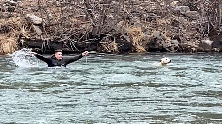 Köpeği kurtarmak için hiç düşünmeden buz gibi suya girdi