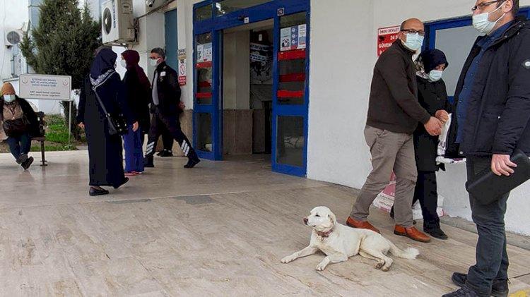 Sahibi tedavi gören Pamuk, 14 gün hastane kapısında bekledi