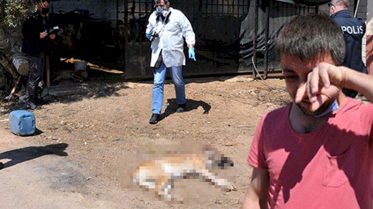 İki köpeği vuruldu, gözyaşlarının sebebi yürekleri dağladı