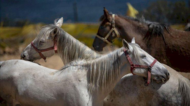 Hatay'da kaybolan 99 at için kaymakamlık harekete geçti