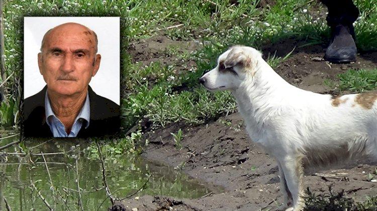 Nehirde aranan yaşlı adamın beslediği köpek, bir an olsun bölgeden ayrılmıyor
