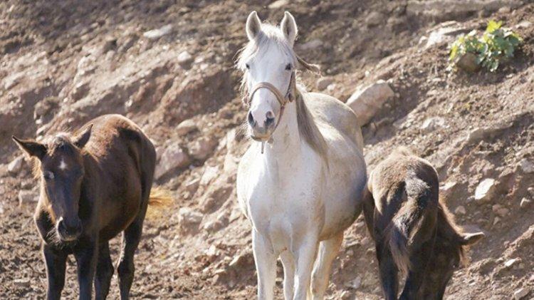 Kayıp atlarla ilgili yeni gelişme
