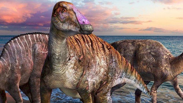 İki ayaklıdan dört ayaklıya evrime işaret eden yeni bir dinozor türü keşfedildi