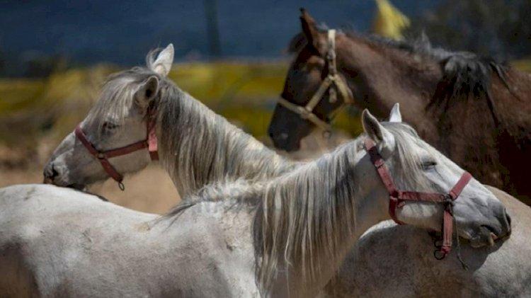 İBB'den 'kayıp at' iddialarına açıklama